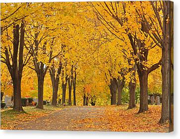 Cemetery In Autumn Canvas Print by Gail Maloney
