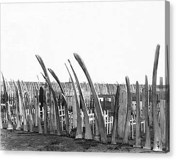 Cemetery Whale Bone Fence Canvas Print by Underwood Archives