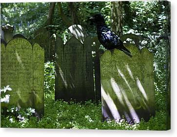 Cemetery With Ancient Gravestones And Black Crow  Canvas Print
