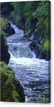 Canvas Print featuring the photograph Cenarth Falls by John Williams