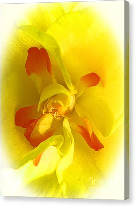 Center Daffodil Canvas Print by Tina M Wenger
