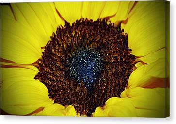 Center Of A Sunflower Canvas Print by Cynthia Guinn