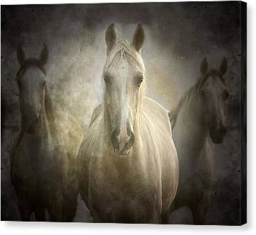 Center Of Attention Canvas Print by Ron  McGinnis