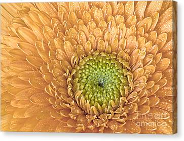 Center Of Attraction Canvas Print