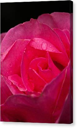 Canvas Print featuring the photograph Center Rose by Haren Images- Kriss Haren