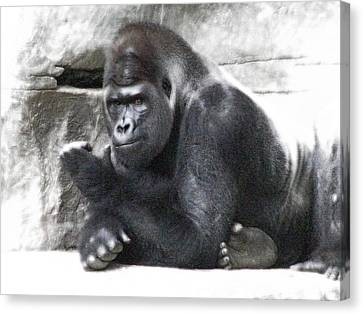 Centerfold Gorilla - 02 Canvas Print by Pamela Critchlow
