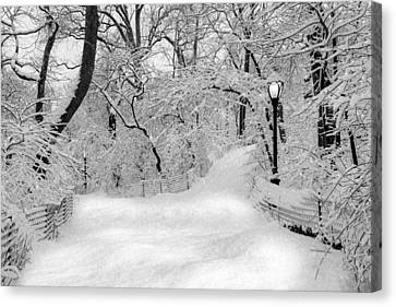 Central Park Dressed Up In White Canvas Print by Susan Candelario