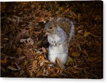 Central Park Squirrel Canvas Print by Marta Grabska-Press