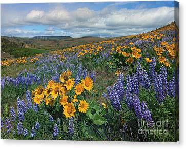 Central Washington Spring Canvas Print by Mike  Dawson