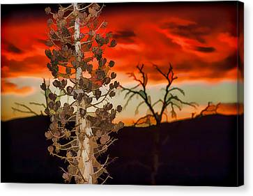 Century Soldier Sunset Canvas Print by Scott Campbell