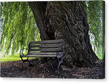 Century Tree Canvas Print by Frozen in Time Fine Art Photography
