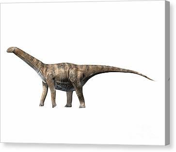 Cetiosaurus Oxoniensis, Middle Jurassic Canvas Print by Nobumichi Tamura