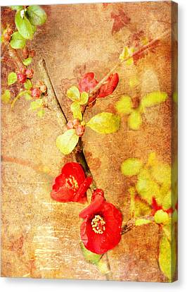 Chaenomeles Canvas Print