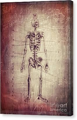 Chalkboard Skeleton Canvas Print by Edward Fielding