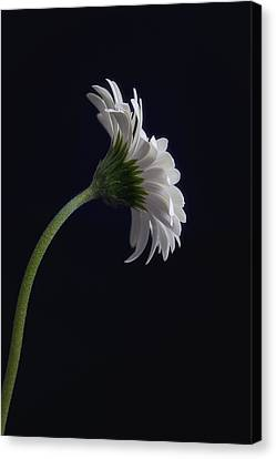 Challenge Canvas Print by Kim Andelkovic