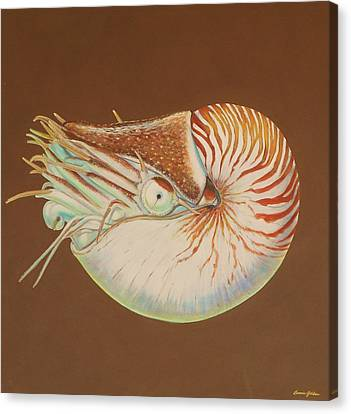 Chambered Nautilus Canvas Print by Bonnie Golden