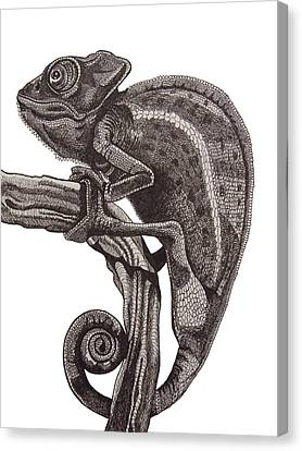 Chameleon At Rest. Canvas Print by Tracey Gurr BA Hons