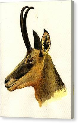 Chamois Deer Canvas Print by Juan  Bosco