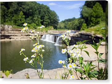 Chamomile At The Falls Canvas Print by Jackie Novak