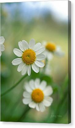 Chamomile Canvas Print by Kathy Yates