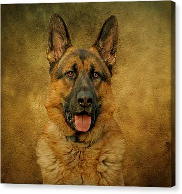 Chance - German Shepherd Canvas Print
