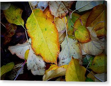 Autum Abstract Canvas Print - Change Of Season by Michelle Wrighton