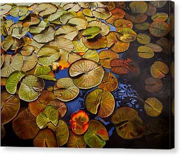 Change Of Season Canvas Print by Thu Nguyen