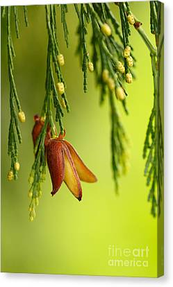 Changes Canvas Print by Beve Brown-Clark Photography