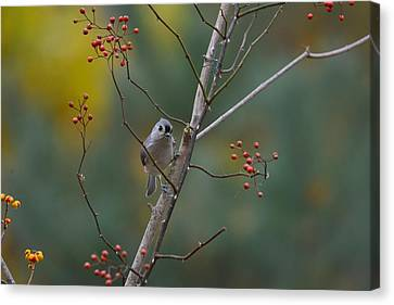 Changing Seasons Canvas Print by Deborah Bifulco