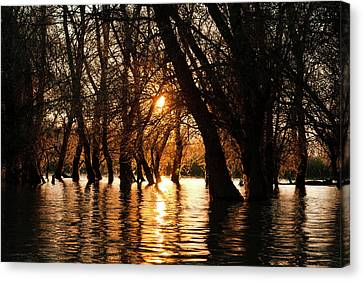 Flooding Canvas Print - Channels During Sunrise In The Danube by Martin Zwick