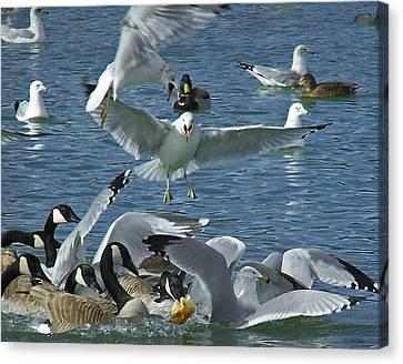 Geese Canvas Print - Chaotic Behavior by Ernie Echols