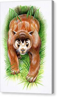 Chapalmalania Prehistoric Raccoon Canvas Print