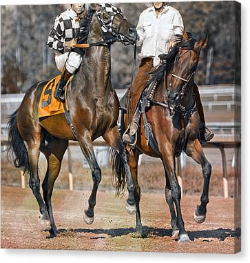 Bay Horse Canvas Print - Chaperoned  by Betsy Knapp
