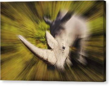 Charging Rhinocerosafrica Canvas Print