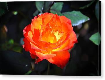 Charisma Rose Horizontal Canvas Print