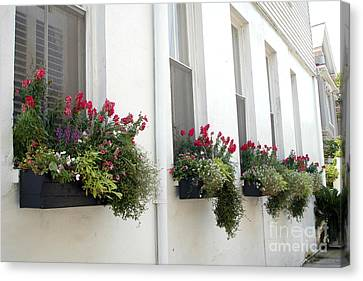 Charleston Houses Canvas Print - Charleston French Quarter Historic District Dreamy Flowers Window Boxes  by Kathy Fornal