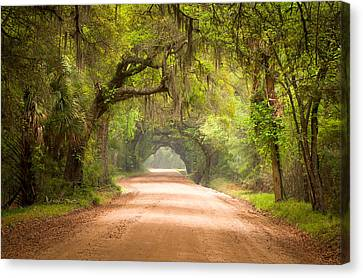 Live Oaks Canvas Print - Charleston Sc Edisto Island Dirt Road - The Deep South by Dave Allen