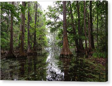 Charleston Swamp Canvas Print by John Johnson