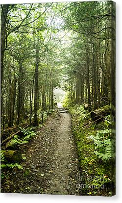 Canvas Print featuring the photograph Charlies Bunion Bald Trail by Debbie Green