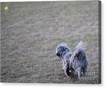 Chase The Ball Canvas Print by Theresa Davis