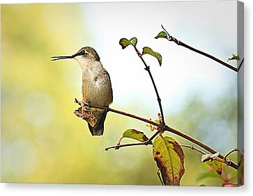 Canvas Print featuring the photograph Chatter by Tammy Schneider