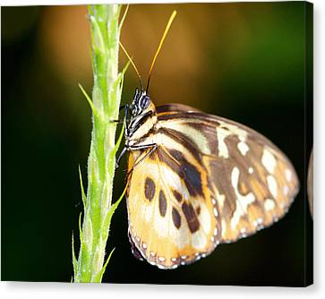 Checkered Past 16x20 Canvas Print by Pamela Gail Torres