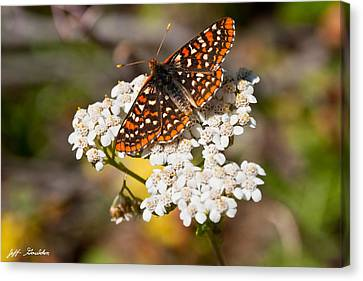 Canvas Print featuring the photograph Checkerspot Butterfly On A Yarrow Blossom by Jeff Goulden