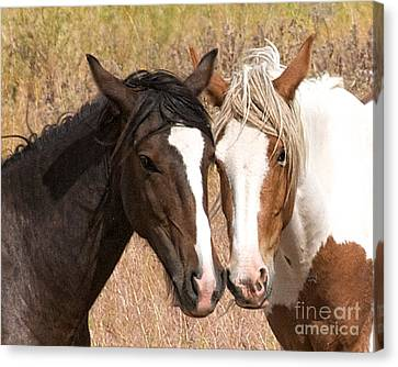 Canvas Print featuring the photograph Cheek To Cheek by Vinnie Oakes