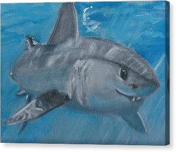 Cheeky Shark Canvas Print