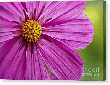 Cheerful Canvas Print by Nur Roy