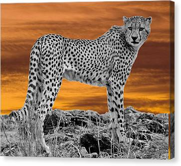 Cheetah At Dusk Canvas Print by Larry Linton