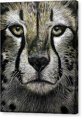 Cheetah  Canvas Print by Chris Perry