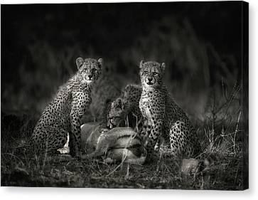 Cheetah Canvas Print - Cheetah Cubs by Mario Moreno