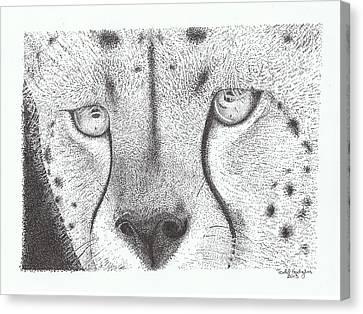 Cheetah Face Canvas Print by Todd Hodgins